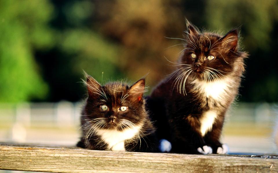小猫猫可爱卖萌壁纸 第11页-zol桌面壁纸