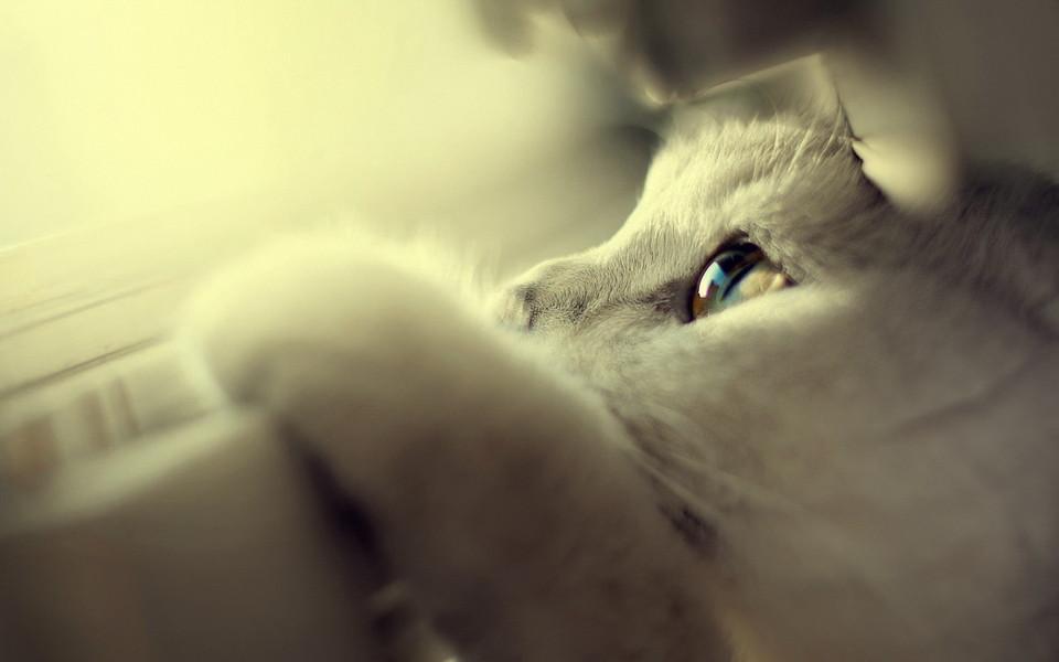 小猫猫可爱卖萌壁纸 第10页-zol桌面壁纸