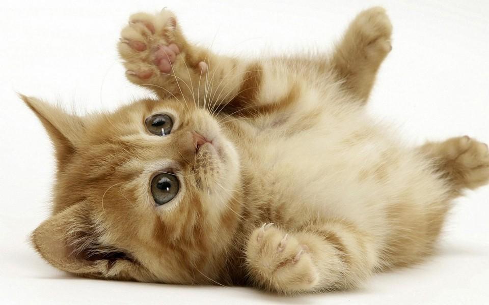 小猫猫可爱卖萌壁纸 第12页-zol桌面壁纸