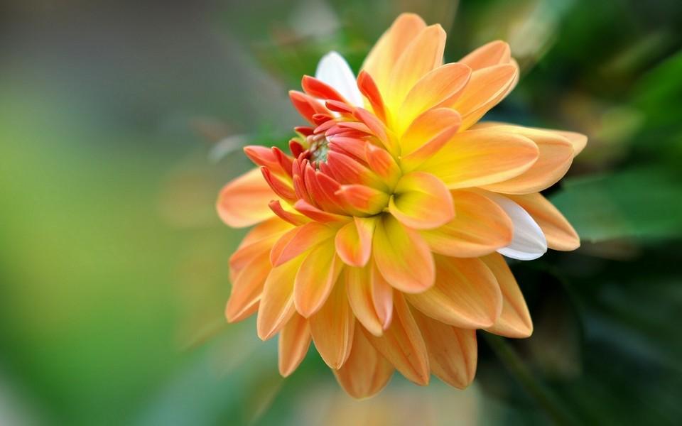 笔记本壁纸 植物壁纸 唯美花卉锁屏壁纸桌面下载   (6/10) 小箭头图标