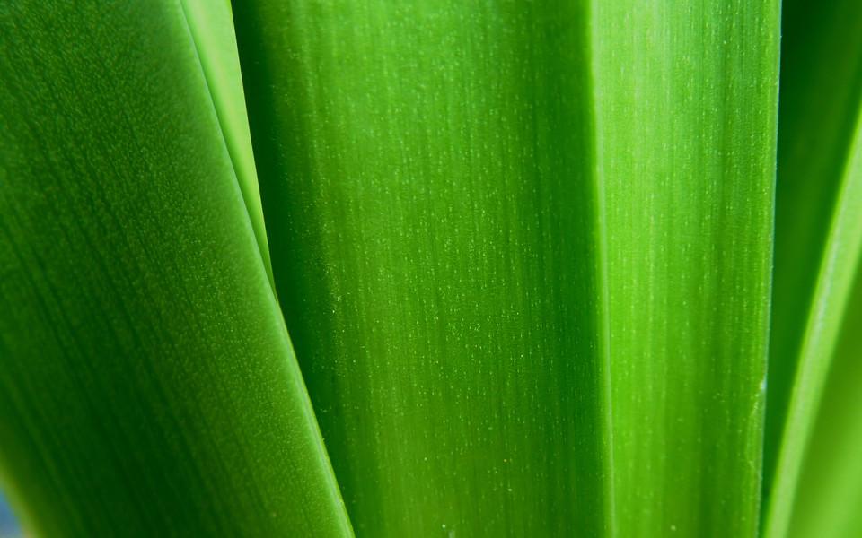 护眼绿色植物桌面壁纸