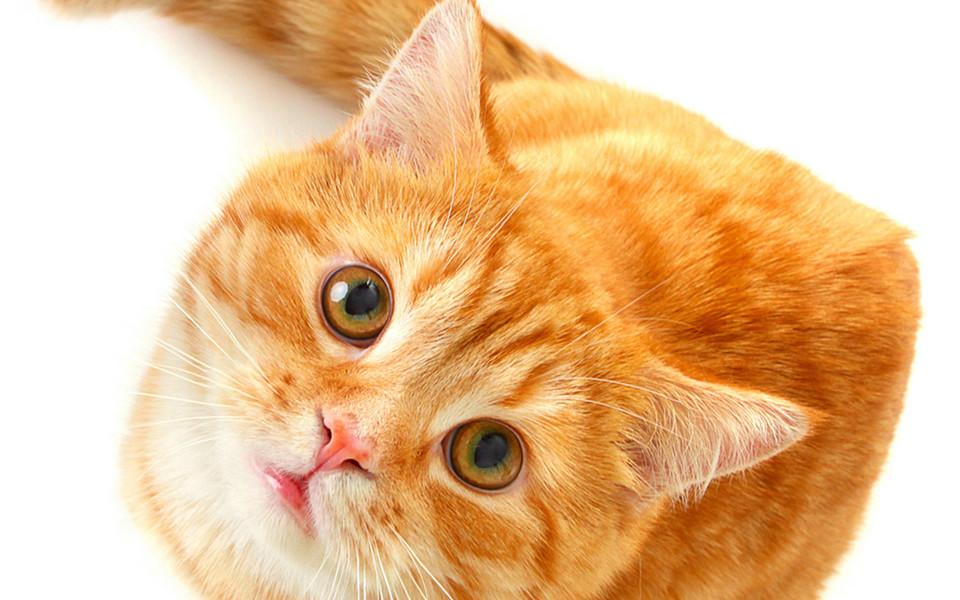 ipad壁纸 萌猫壁纸 可爱小猫ipad壁纸下载   (5/10) 小箭头图标亲~快