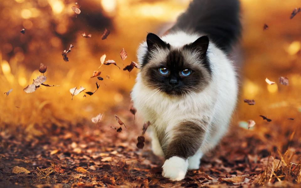 壁纸 动物 狗 狗狗 猫 猫咪 小猫 桌面 960_600