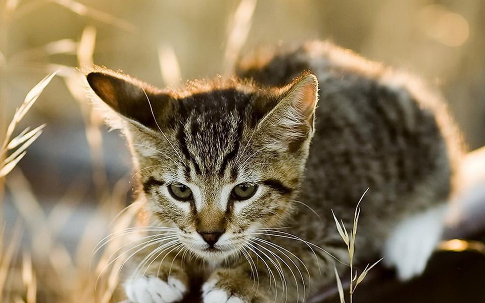 上一组图 下一组图 壁纸标签: 锁屏壁纸 猜您喜欢 可爱小猫ipad壁纸