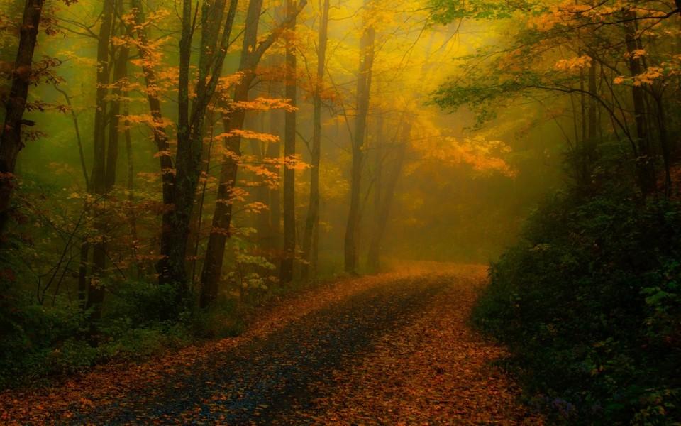 电脑壁纸 自然风景壁纸 唯美林间小路桌面壁纸下载