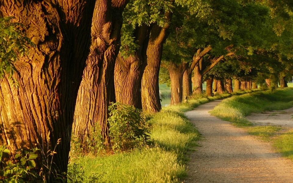 笔记本壁纸 自然风景壁纸 唯美林间小路桌面壁纸下载