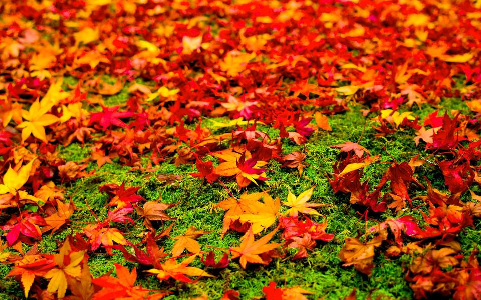 唯美意境壁纸 秋天的树叶唯美壁纸下载   (13/13) 小箭头图标亲~快来