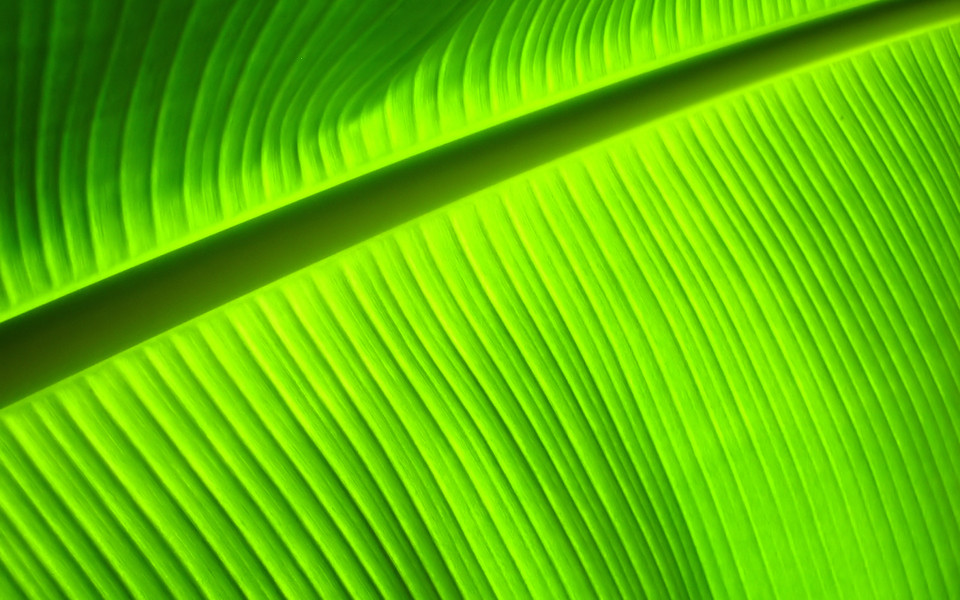 小清新绿色植物护眼桌面壁纸下载