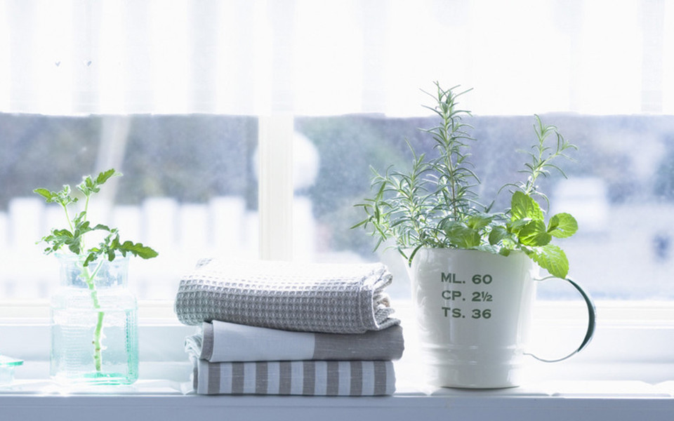 宽屏室内盆栽摄影iPad壁纸 第13页-ZOL桌面壁纸