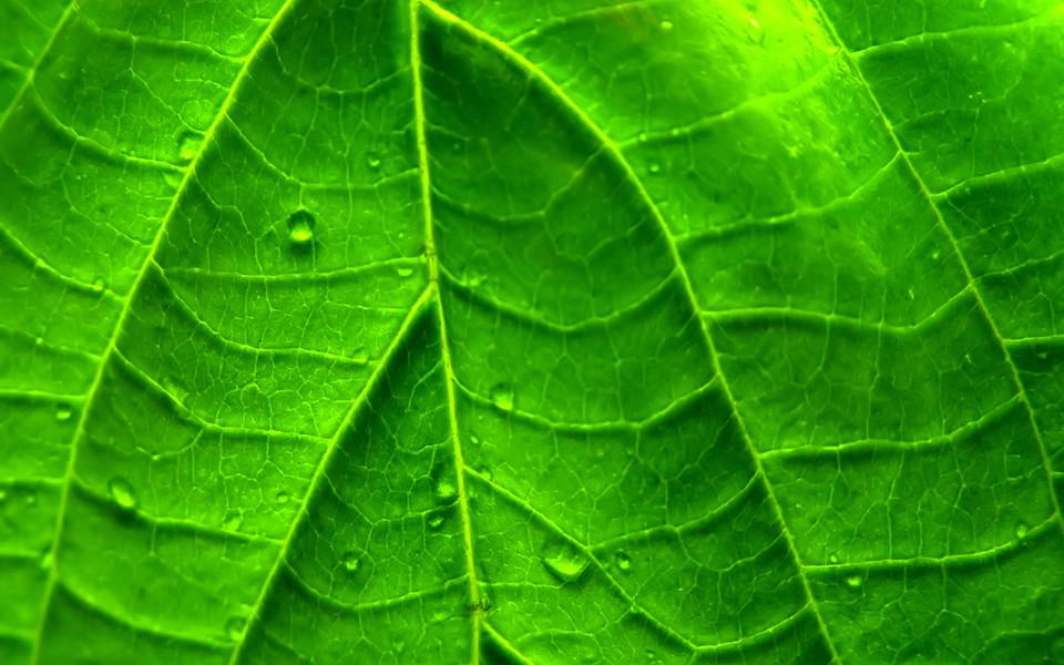 小清新绿色植物护眼桌面壁纸