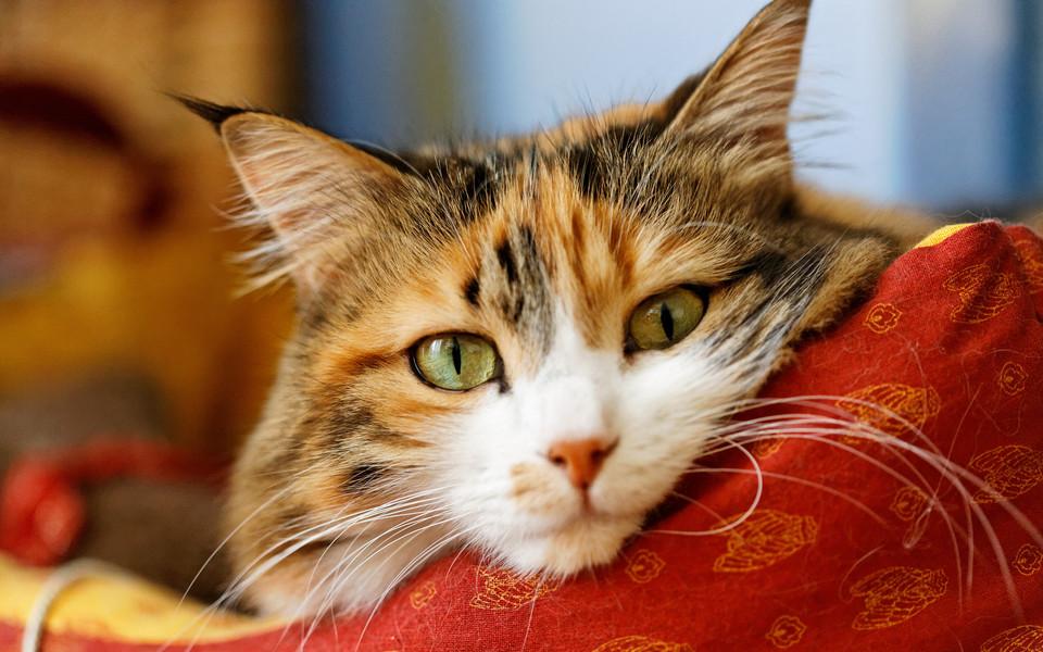 电脑壁纸 萌猫壁纸 呆萌可爱桌面壁纸下载下载