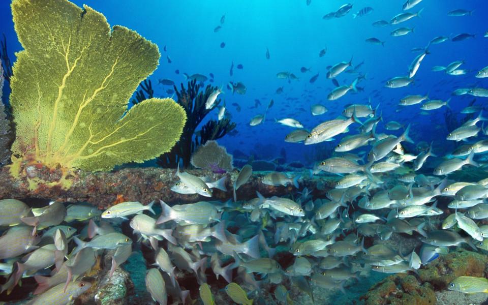 热带海底世界高清壁纸